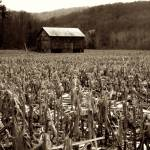 """Pennsylvania Cornfield"" by mpujals"