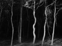 Woods At Night X