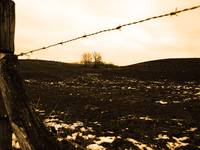 Barbed Wire and Pasture