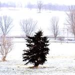 """Lone Tree in Snow"" by onetruesentence"