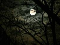 Witchy Moon