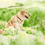 """Golden Retriever Chance"" by mozache"