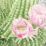"""""""Cactus"""" by mozache"""