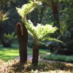"""Tree Fern"" by pluppy"