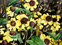 black eyed susans flower art prints