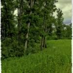 """Trees - Gettysburg, Pennsylvania"" by madeline"