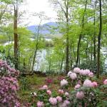 """Hiawassee Gardens"" by carleepix"