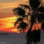 """Sunrise St Pete"" by carleepix"