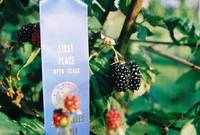 Mom's Prizewinning Blackberries