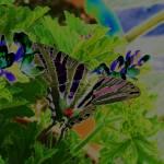 """""""neonbutterfly"""" by teenolan"""