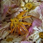 """FadedBlossoms"" by teenolan"