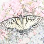 """""""Butterfly Sketch"""" by teenolan"""