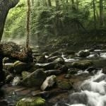 """Smokey Mountain Stream"" by robertwalkerphotography"