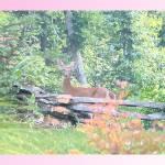 """Mama Deer"" by teenolan"