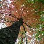"""""""Autumn Up!"""" by teenolan"""