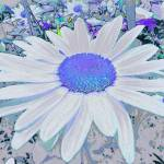 """""""Astral Blue Daisy"""" by petersart"""