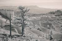Bryce Canyon Trees - Infrared desert landscape