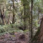 """""""Rain Forest, Tasmania"""" by Framtonm"""