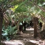 """""""Forest Ferns, Tasmania"""" by Framtonm"""