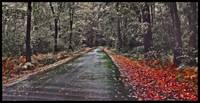 Strawberry Road and RED leafs