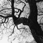 """""""Branching Out"""" by KimSuwak"""