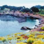 """Point Lobos"" by sboyle"