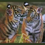 """TIGERS IN LOVE"" by artistcain"
