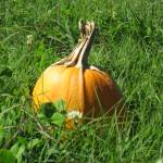 """""""Pumpkin"""" by Imagiro"""