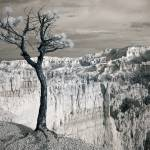 """Remain - infrared tree landscape"" by miir"
