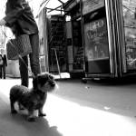 """Dog in Paris"" by SmartMarmot"