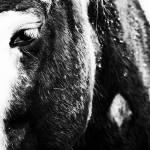 """HorseNeckScar"" by onetruesentence"