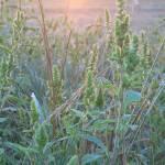 """wildgrasssunrise"" by melenakyriaco"