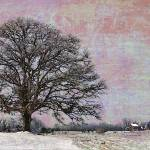 """Old Oak Tree"" by Joselyn_Holcombe"