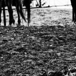 """Horse Legs"" by onetruesentence"