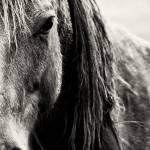 """""""In a horse"""