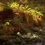 """Nurse Log, Moran State Park"" by ketchemr"
