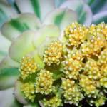 """""""Cactus Series #1"""" by halehmahbod"""