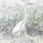 """Crane"" by mfmarsphoto"