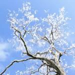 """""""SNOW TREE"""" by HIPHEMP"""