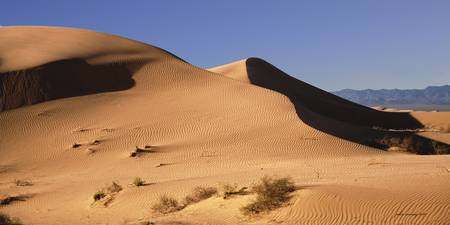 Algodones Dunes No 4