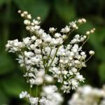 """Flower 003b White Green"" by Ricardos"