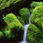 """Mossy Cascade"" by Inge-Johnsson"