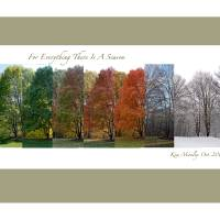 """Tree in All Four Seasons"" by Kim Manley Ort"