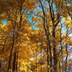 """""""Colorful Fall Scene, NJ"""" by budvg"""