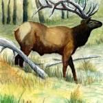 """Gash Flats Bull"" by JimmySmith"