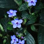 """Five in Blue"" by pluppy"