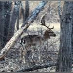 """""""Deer after sunset"""" by fejesb"""