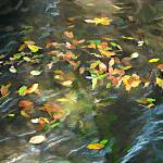 """Colored Leaves on Water"" by pluppy"