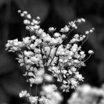 """Flower 003aBW Black and White Gray Scale"" by Ricardos"