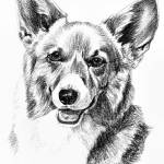 """Pembroke Welsh Corgi Head"" by Stonehenge"
